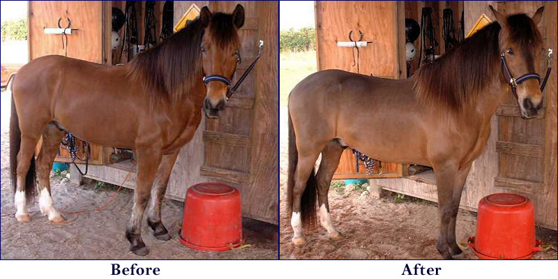 Heat Wave Suburban Cowgirl - Before and after achorse stable